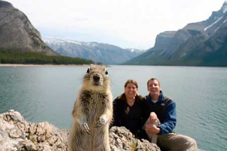 Squirrel jumps into photo